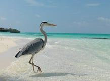 maldives Un pájaro que se coloca en una pierna en la playa Día asoleado Foto de archivo