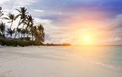 maldives Una costa de la playa arenosa, de la palma y de mar imagenes de archivo
