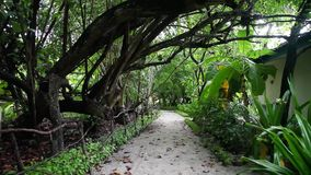 Maldives, walk inside the island in between the plants and trees stock video