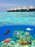 Maldives. Water villas and the underwater world wi. Th small fishes in corals Royalty Free Stock Photos