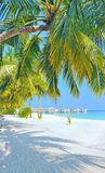 Maldives white beach and palm tree Stock Photos