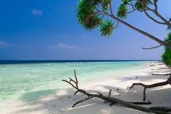 Maldives, white sand, palms stock photo