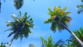 Maldives white sandy beach coconut palm trees on sunny tropical paradise island with aqua blue sky sea ocean 4k Stock Image
