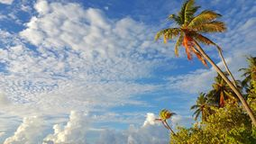 P00777 Maldives white sandy beach coconut palm trees on sunny tropical paradise island with aqua blue sky sea ocean 4k. Maldives white sandy beach coconut palm Royalty Free Stock Photos