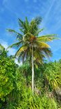 P00772 Maldives white sandy beach coconut palm trees on sunny tropical paradise island with aqua blue sky sea ocean 4k. Maldives white sandy beach coconut palm Royalty Free Stock Photo