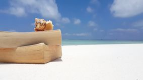 Maldives white sandy beach reading book seashell on sunny tropical paradise island with aqua blue sky sea water Royalty Free Stock Image