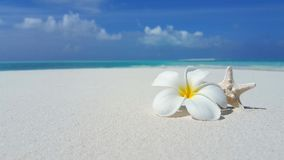 P01973 Maldives white sandy beach yellow flower on sunny tropical paradise island with aqua blue sky sea ocean 4k Stock Photography