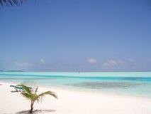 Maldives. White topical beach in Maldives Stock Image