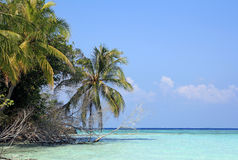 The maldives royalty free stock image