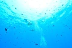 Maldivian海 库存图片