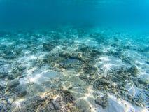 Maldivian ψάρια θάλασσας στοκ εικόνες με δικαίωμα ελεύθερης χρήσης