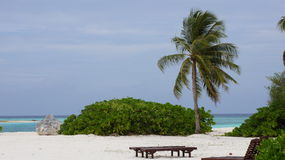 Maldivian beach. Beach in the Maldives with a single palm tree, shrub and stone royalty free stock images