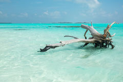 Maldivian Drzewny Seascape Zdjęcie Stock
