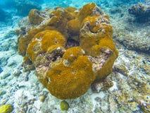Maldivian eilandkoralen Stock Fotografie
