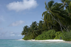 Maldivian island coast Stock Photography