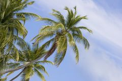Maldivian Island Palm Trees Stock Photography