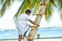 Maldivian muslim man in national clothes climbing palm tree royalty free stock image