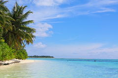 Maldivian palm BEACH and Indian ocean Royalty Free Stock Image