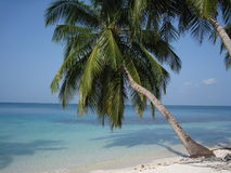 Maldivian palm tree Royalty Free Stock Photography