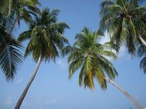 Maldivian palm tree Stock Images