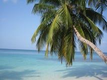 Maldivian palm tree Stock Image