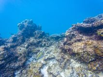 Maldivian rafy korale obraz royalty free