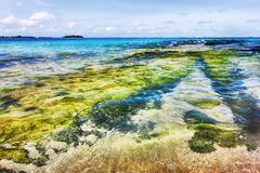 Maldivian shoreline with transparent water hits the coral reef. In an uninhabited atoll Royalty Free Stock Photography