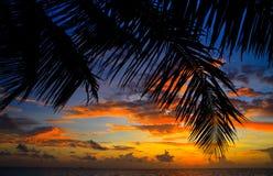 maldivian solnedgång royaltyfri bild