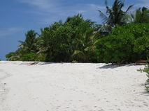 Maldivian Strand met palmen Royalty-vrije Stock Fotografie