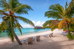 Maldivian tropical beach with sun beds and coconut palms.  Stock Photo