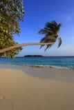 Maldivisk ö Arkivbild