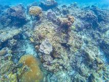 Maldiviska havskoraller royaltyfri foto