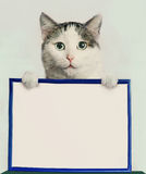 Male adult cat hold blank paper in frame Stock Images
