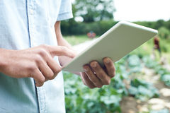 Male Agricultural Worker Using Digital Tablet In Field Stock Images
