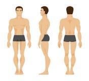 Male anatomi också vektor för coreldrawillustration Arkivfoto
