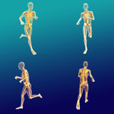 Male Anatomy 7 Royalty Free Stock Images