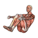 Male Anatomy Figure Stock Images