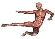 Male Anatomy Figure Stock Photo
