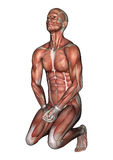 Male Anatomy Figure Royalty Free Stock Photos