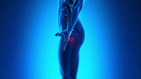 Male anatomy - Human Prostate. Scan stock video