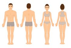 Free Male And Female Body Chart Stock Images - 154419054