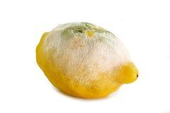 Male andato limone Fotografie Stock