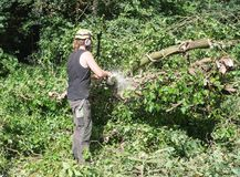 Male Arborist using a chainsaw on the ground. Male Tree Surgeon using a chainsaw royalty free stock photo