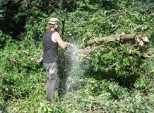 Male Arborist using a chainsaw sends woodchips flying. Male Tree Surgeon using a chainsaw stock images