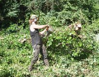 Male Arborist using a chainsaw working on a felled tree. Male Tree Surgeon using a chainsaw stock photos