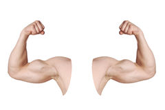 Male arms with flexed biceps muscles Royalty Free Stock Photos
