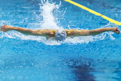 Male athlete swimmer. Swims butterfly stroke in pool Royalty Free Stock Image