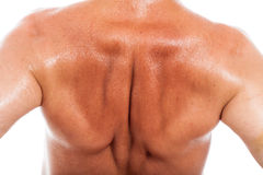 Male back detail. Close up of naked male back Royalty Free Stock Photo