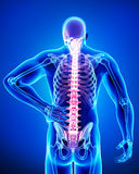 Male of back pain. 3d rendered illustration of Anatomy male in back pain Royalty Free Stock Photos