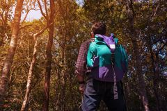 Male Backpacker Travel Trekking or Hiking in Jungle Royalty Free Stock Photo